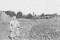 Ogórki w ogrodzie Bezekowiczów, 1956